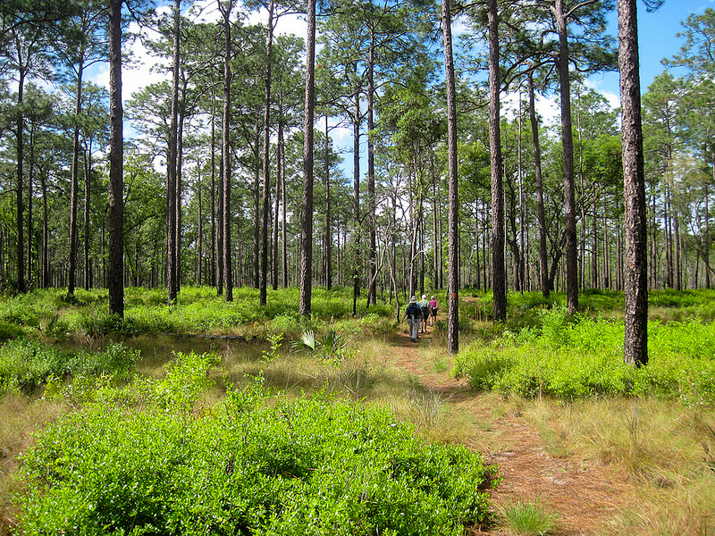 Hiking with friends in the Ocala National Forest
